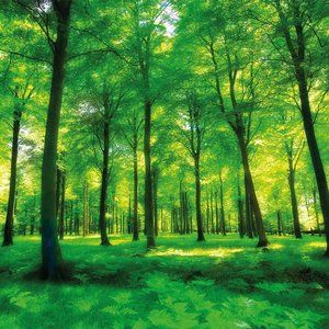 Forest / woodland wallpaper roll